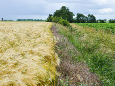 Sustainability of Agriculture in varying economic conditions of EU countries