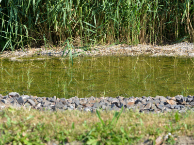 Enhancement of nitrogen and phosphorus removal in constructed treatment wetlands